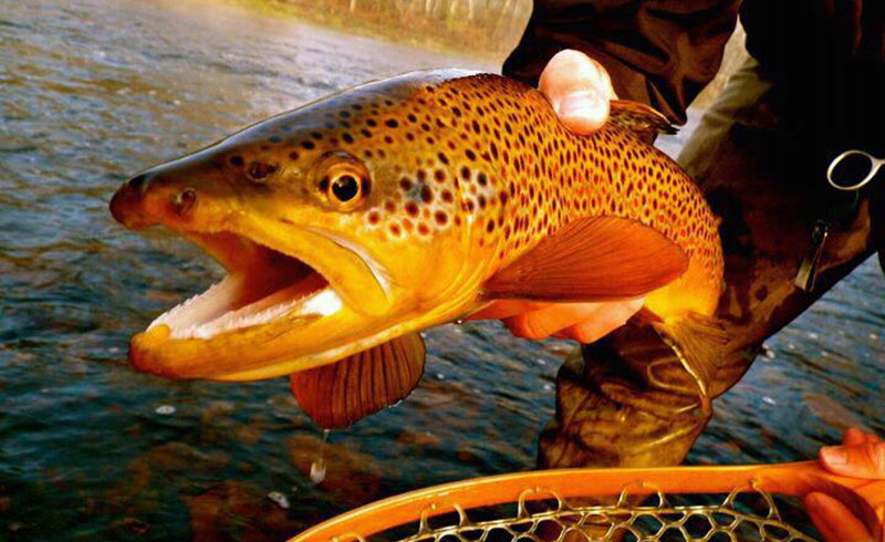 fly fishing and cast and blast packages