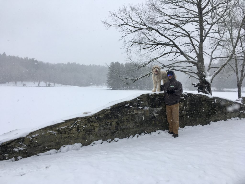 Dog on snowy rock wall, standing with man.